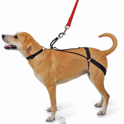 hind leg hargan canine tug preventing hind leg harness large 51 100 lbs blend ebay