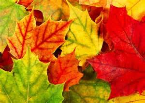 In Fall why do fall leaves tend to be red in america but yellow in europe