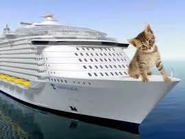 portare gatto in aereo viaggio in aereo col gatto