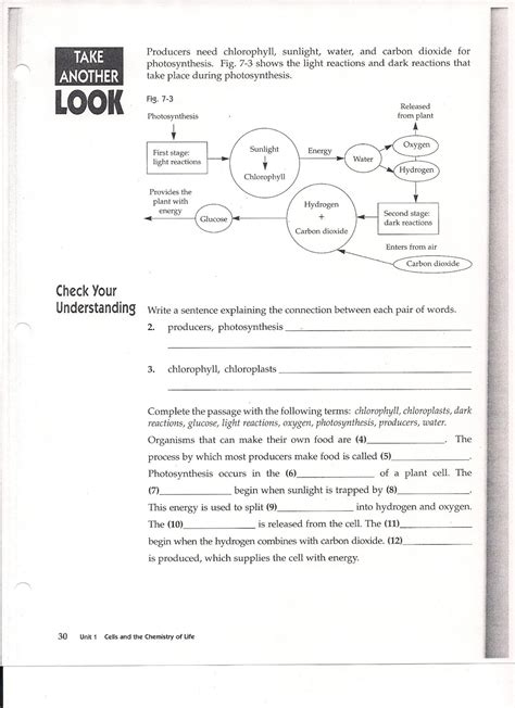 Photosynthesis Worksheet by Ms Friedman S Foundations In Science Photosynthesis