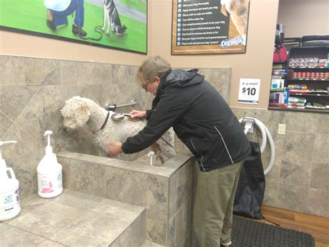 raised dog bathtub diy dog washing at pet valu