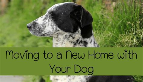 moving to a new house with a dog moving to a new home with your dog dogvills