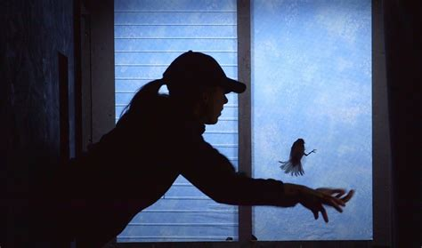 can we stop birds from crashing into windows