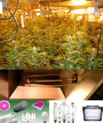 best light bulbs for growing weed best marijuana lights for growing weed indoors