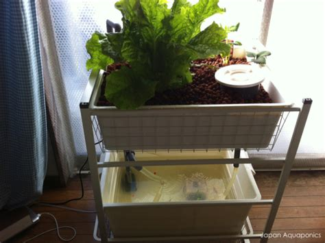 aquaponic indoor garden 12 diy aquaponics system for indoor and backyard the
