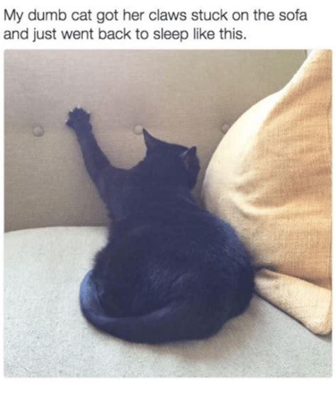 25 best memes about dumb cat dumb cat memes