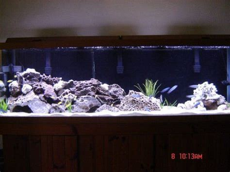 mbuna aquascape 125 gallon mbuna tank fish tank ideas pinterest tanks