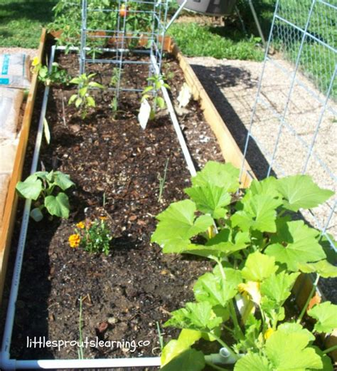 benefits of raised garden beds 10 key benefits of gardening in raised beds little