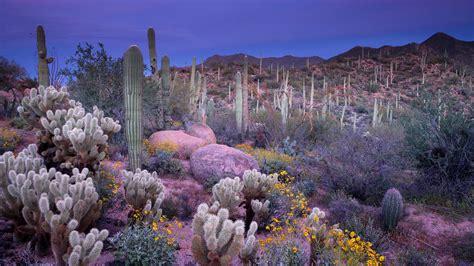 saguaro national parks conservation association