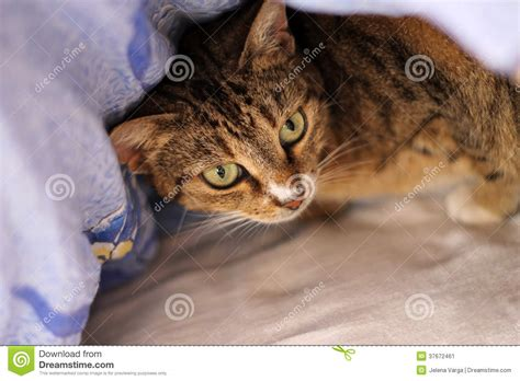new cat hiding under bed cat hiding in couch hot girls wallpaper