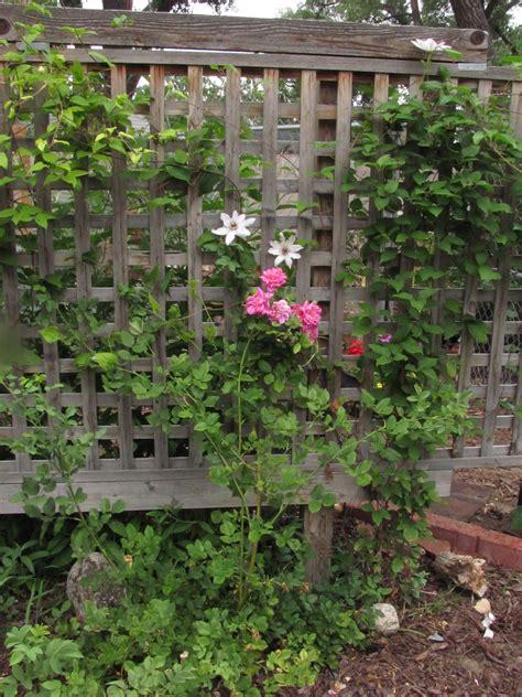 better homes and gardens trellis juniper trellis fence top fences lattice the home depot model1337 clipgoo