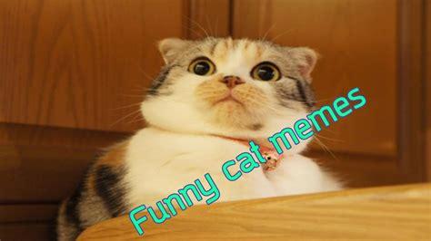 Cute Funny Cat Memes - funny animal videos funny cute cat memes youtube