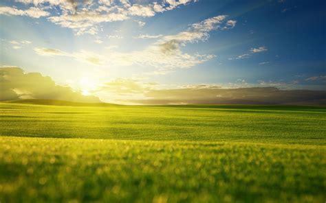 grass sky light wallpaper