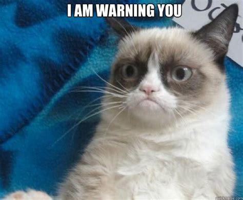New Grumpy Cat Memes