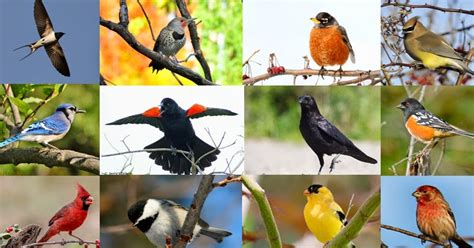 backyard birds of north america quiz can you name these 20 common north american backyard