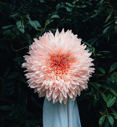 Beautiful Paper Flowers - beautiful paper flowers by tiffanie turner 123