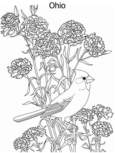 coloring pages of birds and flowers state flower and state bird coloring page