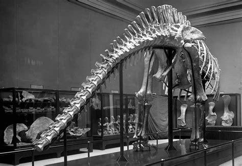 towering facts  brachiosaurus mental floss