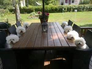 Cat Sitting On Glass Table Dog Table 1funny Com