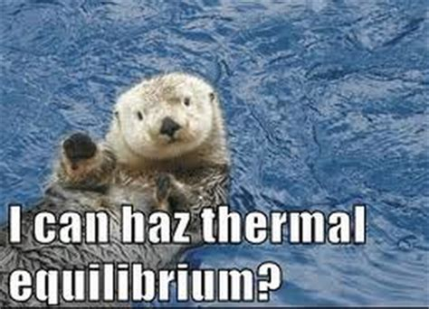 Sea Otter Meme - sea otter memes save the sea otters