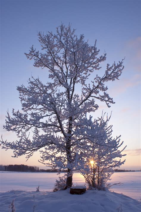 stop and shop trees protecting your trees and shrubs from winter weather atlantic maintenance