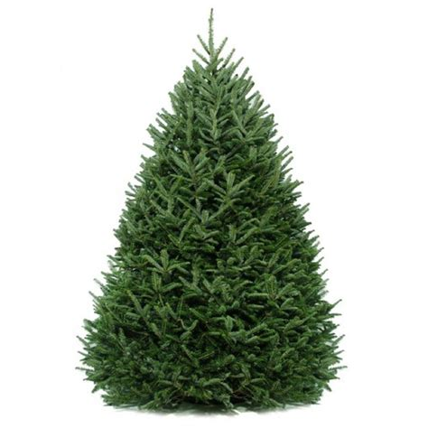 home depot real christmas tree cottage farms direct 6 ft to 6 5 ft freshly cut fraser fir real tree live hd9000