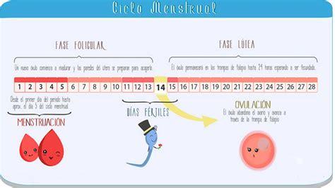 Calendario Hormonal Proceso Ciclo Menstrual