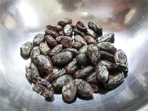 best cacao ecuador