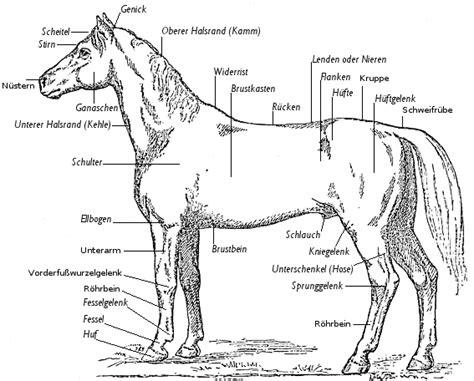 schemel englisch alles 252 ber pferde