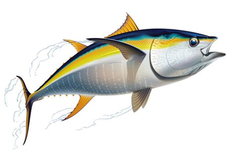 yellowfin boat drawing yellowfin tuna drawing