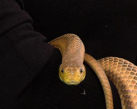 serpenti volanti sur les traces du serpent xavier bonnet