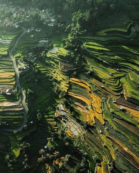wisata ladang sawah  cantik  indonesia madu lounge