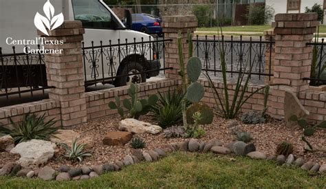 water solutions east succulents home garden