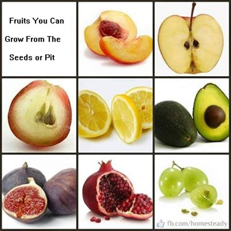 fruit with seeds or pits fruits you can grow from seed naturally nourishing