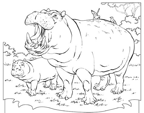 hippo coloring pages online hippopotamus coloring page printable coloring pages