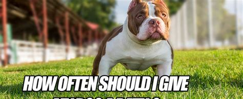 how often should i bathe my puppy how often should i give my a bath bully 174