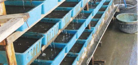 prospek menjanjikan dari bisnis cacing agribisnis co id
