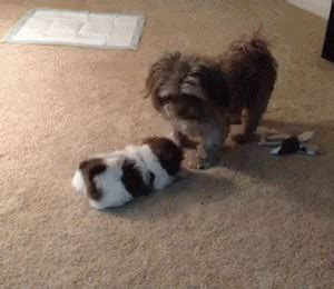 puppies gif puppies gif puppies discover gifs