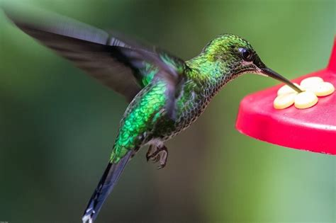 can i install hummingbird flying on a christmas tree top 8 best hummingbird feeders to easily attract