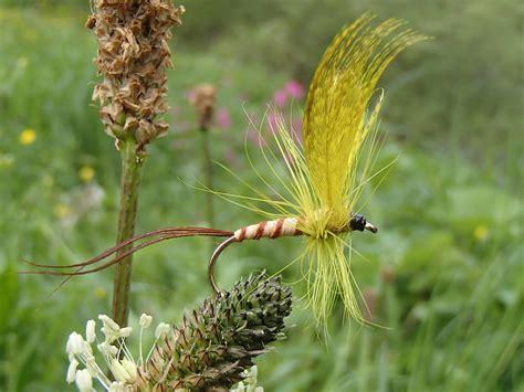 yellow mayfly pattern mayflies