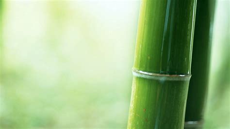 imagenes wallpaper bamboo bamboo wallpapers best wallpapers