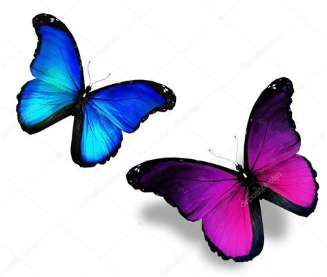 imagenes mariposas violetas dos mariposas azules violetas sobre fondo blanco foto de