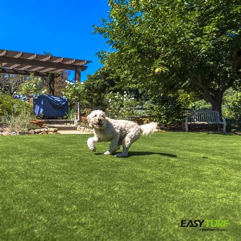backyard pets 73 best images about easyturf backyard pet design on