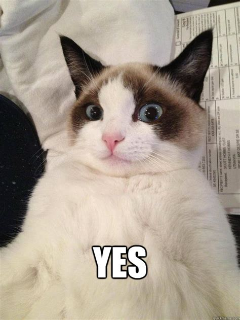 memes de gatos  whatsapp fondos wallpappers portadas