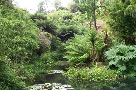 Lost Gardens Of Heligan by Heligan Uncovers Lost History Pro Landscaper The