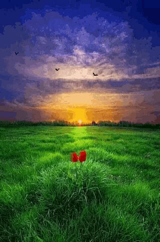 Nature gif 7 » GIF Images Download D Alphabet Wallpapers