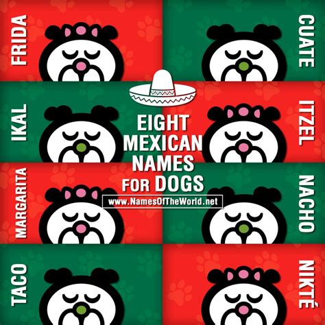 mexican puppy names eight mexican names for dogs