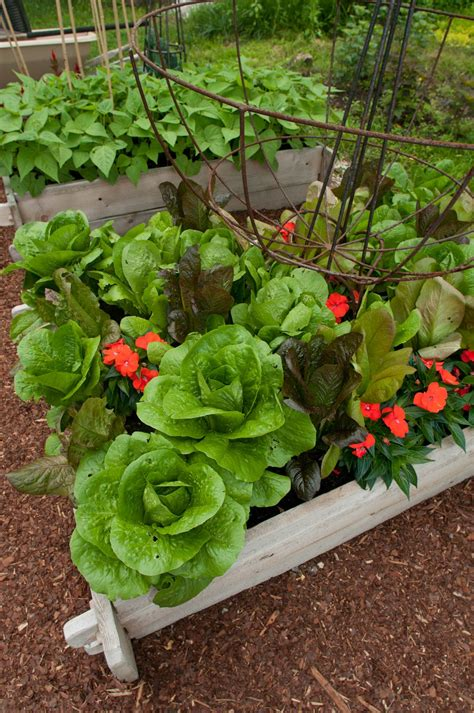 Salad Box Beautiful Vegetable Gardens Pinterest Beautiful Vegetable Garden Pictures