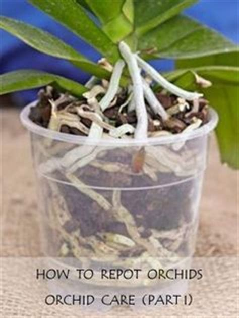 repotting orchids orchid care part i technology plants and earthworms