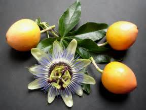 Flowers And Fruits - flores on pinterest passion flower hibiscus and